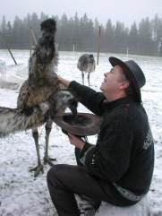 feeding emues