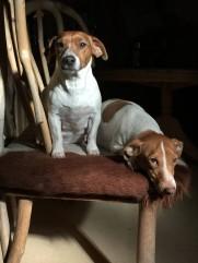 Ginger og Sheila